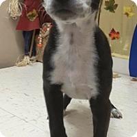 Adopt A Pet :: Frannie - Pompton Lakes, NJ