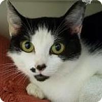 Adopt A Pet :: Jigsaw - Trevose, PA