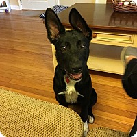 Adopt A Pet :: Maggie - Wethersfield, CT