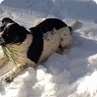Adopt A Pet :: Allie - Warrenton, NC
