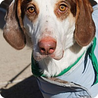 Adopt A Pet :: Clark - Washington, DC