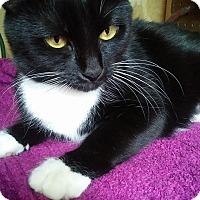 Adopt A Pet :: Shelia Mulligan - Mebane, NC