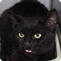 Adopt A Pet :: Rico - Columbia, SC