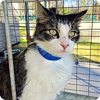 Adopt A Pet :: Harry - Smithtown, NY