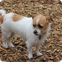 Adopt A Pet :: Tiny - E. Wenatchee, WA