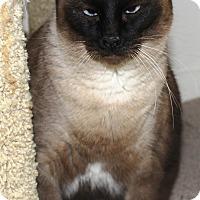 Adopt A Pet :: Tia - Casa Grande, AZ