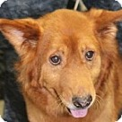 Adopt A Pet :: Lucy Rose