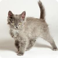 Adopt A Pet :: Monty - Kingston, ON