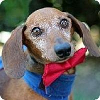 Adopt A Pet :: ROSCOE PICO - Atascadero, CA