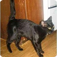 Adopt A Pet :: Beatrice - Summerville, SC