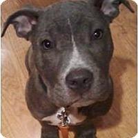 Adopt A Pet :: Shayna - Beachwood, OH