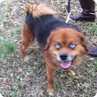 Adopt A Pet :: Milo - Arlington, TN