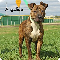 Adopt A Pet :: Angelica - Lake Jackson, TX
