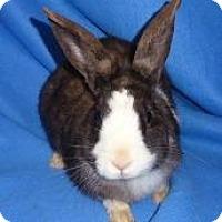 Adopt A Pet :: Prince - Woburn, MA