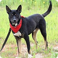 Adopt A Pet :: TOBY - Poway, CA