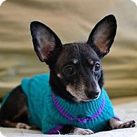 Adopt A Pet :: Zippidy - Poughkeepsie, NY