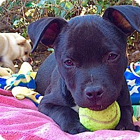 Adopt A Pet :: Snickers (male) - Los Angeles, CA