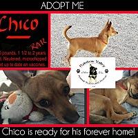 Adopt A Pet :: Chico - Buckeye, AZ