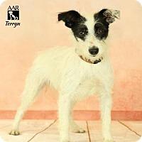 Adopt A Pet :: TERRYN - Tomball, TX