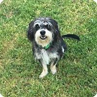Adopt A Pet :: Chuck - Sacramento, CA