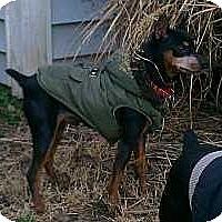 Adopt A Pet :: Roscoe 2 - Nashville, TN