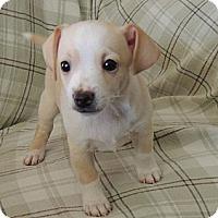 Adopt A Pet :: Gatsby - La Habra Heights, CA