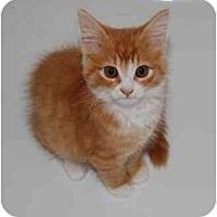 Adopt A Pet :: Bruno - Richmond, VA