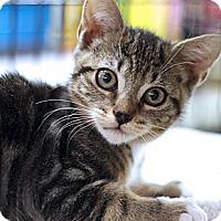 Adopt A Pet :: Crow - Sacramento, CA
