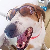 Adopt A Pet :: Wilson - Knoxville, TN