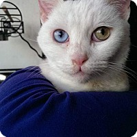 Adopt A Pet :: NOEL - Ridgewood, NY