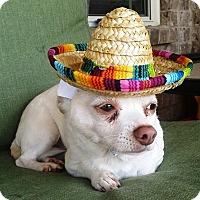 Adopt A Pet :: Vito - Marietta, GA