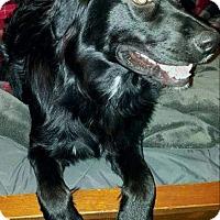 Adopt A Pet :: Vanagander(Van) - Chattanooga, TN