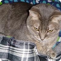 Adopt A Pet :: Juno - Buhl, ID