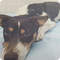 Adopt A Pet :: Patches - Yelm, WA