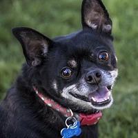 Adopt A Pet :: Jet - El Cajon, CA