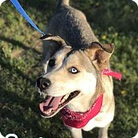 Adopt A Pet :: Spring - E. Greenwhich, RI