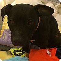 Adopt A Pet :: Sandra Dee (COURTESY POST) - Baltimore, MD