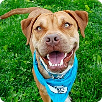 Adopt A Pet :: Bart - Wilmington, DE