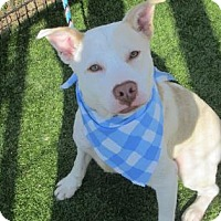 Adopt A Pet :: Joey 539-15 - Cumming, GA