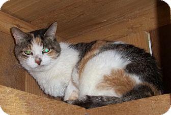Domestic Shorthair Cat for adoption in Witter, Arkansas - KITTEN