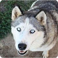 Adopt A Pet :: Baby - Belleville, MI