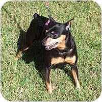 Adopt A Pet :: MISCHA - Springvale, ME