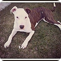 Adopt A Pet :: Luna,gives love freely - Sacramento, CA