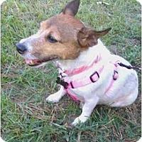 Adopt A Pet :: Gracie in Houston - Houston, TX