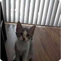 Adopt A Pet :: Remy - Warren, MI