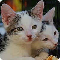 Adopt A Pet :: Nora - Brooklyn, NY