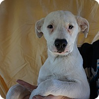 Adopt A Pet :: Sunni - Oviedo, FL