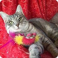 Adopt A Pet :: Carson - Bloomsburg, PA