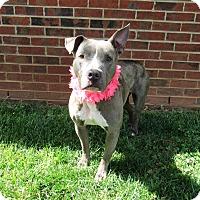 Adopt A Pet :: NALA - Lexington, NC