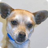 Adopt A Pet :: Golden - Wildomar, CA